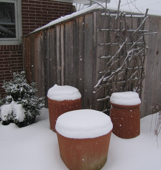 potted garden-winter