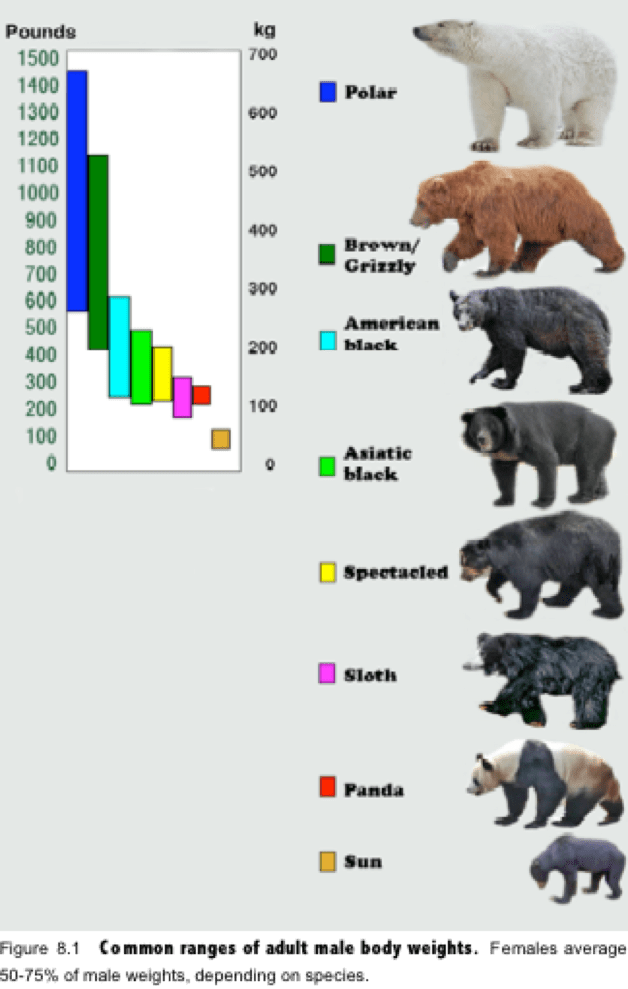 81ff5e10939a1589 pandas vs grizzlies comparing two fascinating species of bear