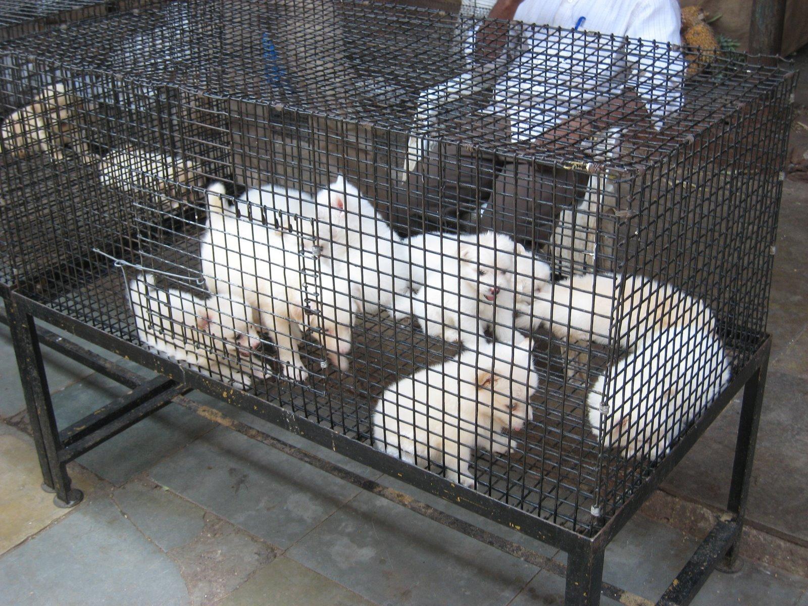 Puppy World Puppy Mills Photos