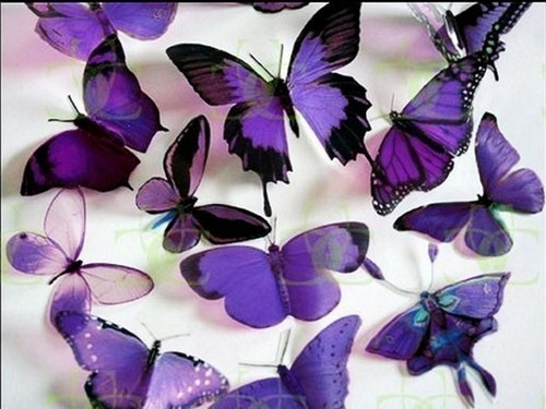 Purple Butterflies - butterflies Wallpaper