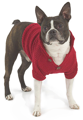 * Im not a huge fan of doggie sweaters, but this is a really cute pic.