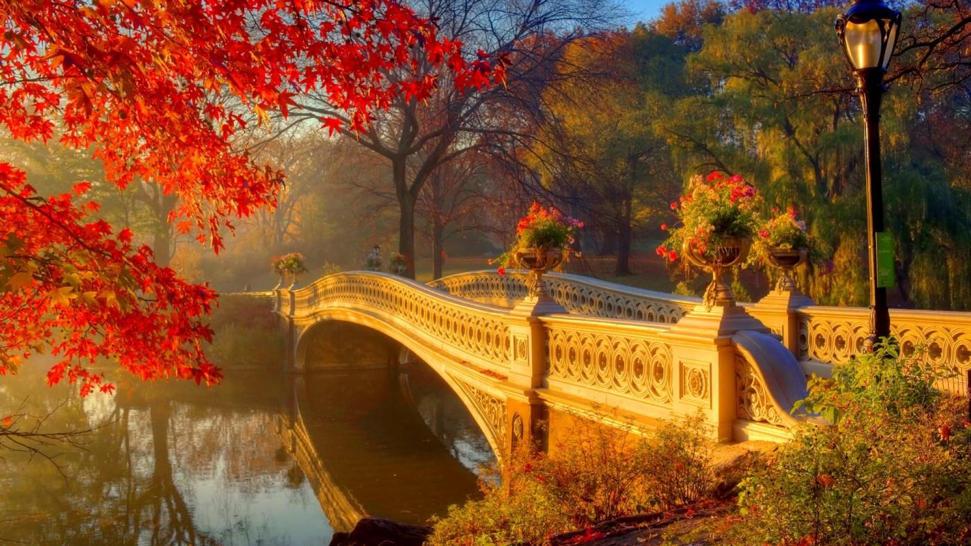 Central Park's Bow Bridge in Autumn Papel de Parede HD   Plano de ...