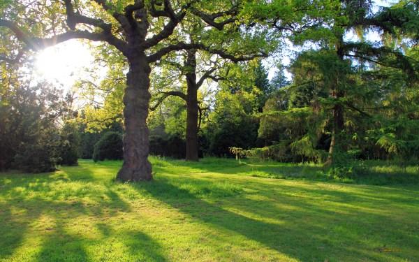 Oak Tree HD Wallpaper | Background Image | 2560x1600 | ID ...