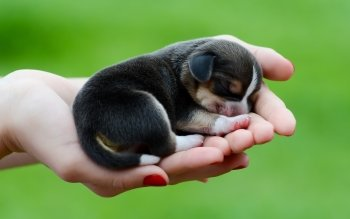 565 Puppy HD Wallpapers   Background Images   Wallpaper Abyss HD Wallpaper   Background Image ID 452950  1680x1050 Animal Puppy