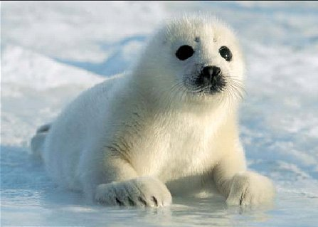 Seal Pictures