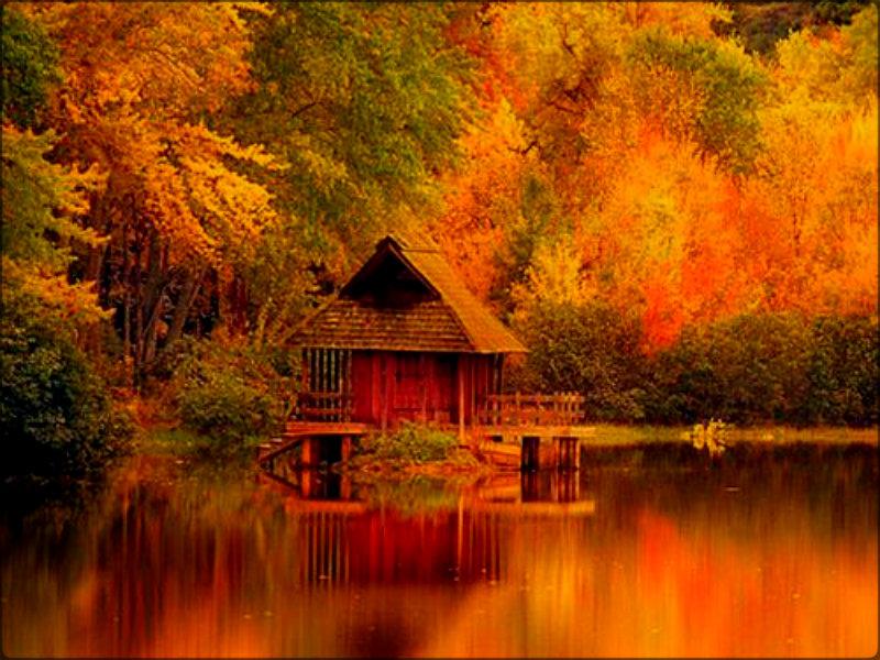 fall leaf wallpaper hd