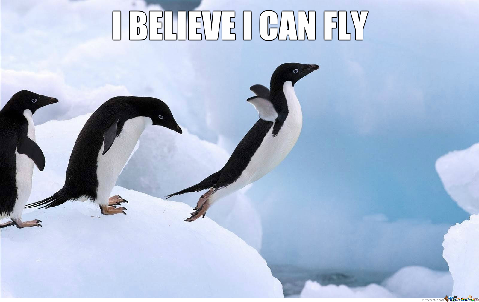 Penguin Believe He Can Fly