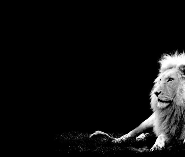 Lions Wallpaper Titled Lion