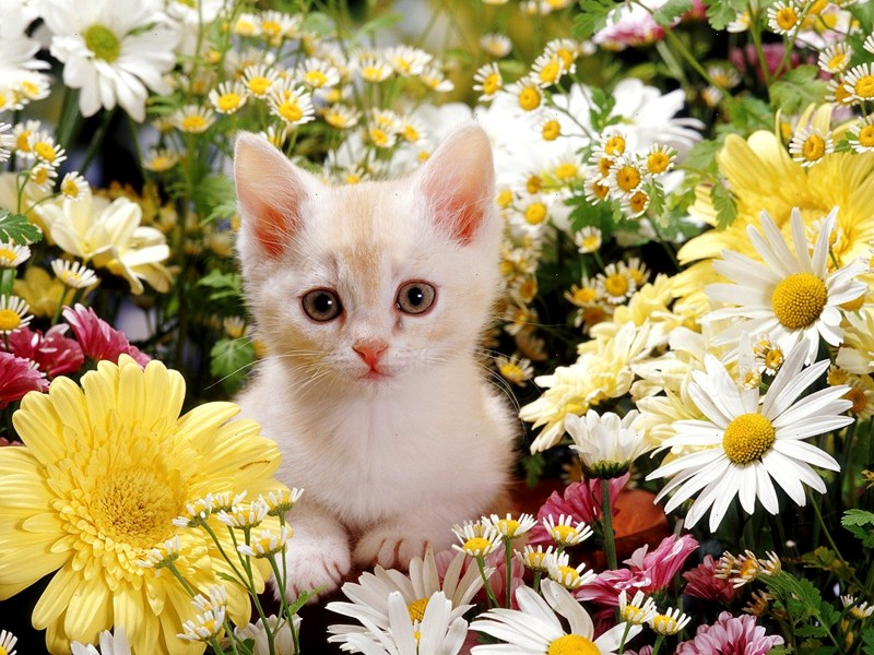 Cute Kittens images kitties and flowers HD wallpaper and background     Cute Kittens images kitties and flowers HD wallpaper and background photos