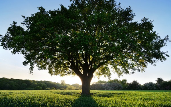 Tree Wallpaper and Background Image | 1680x1050 | ID ...