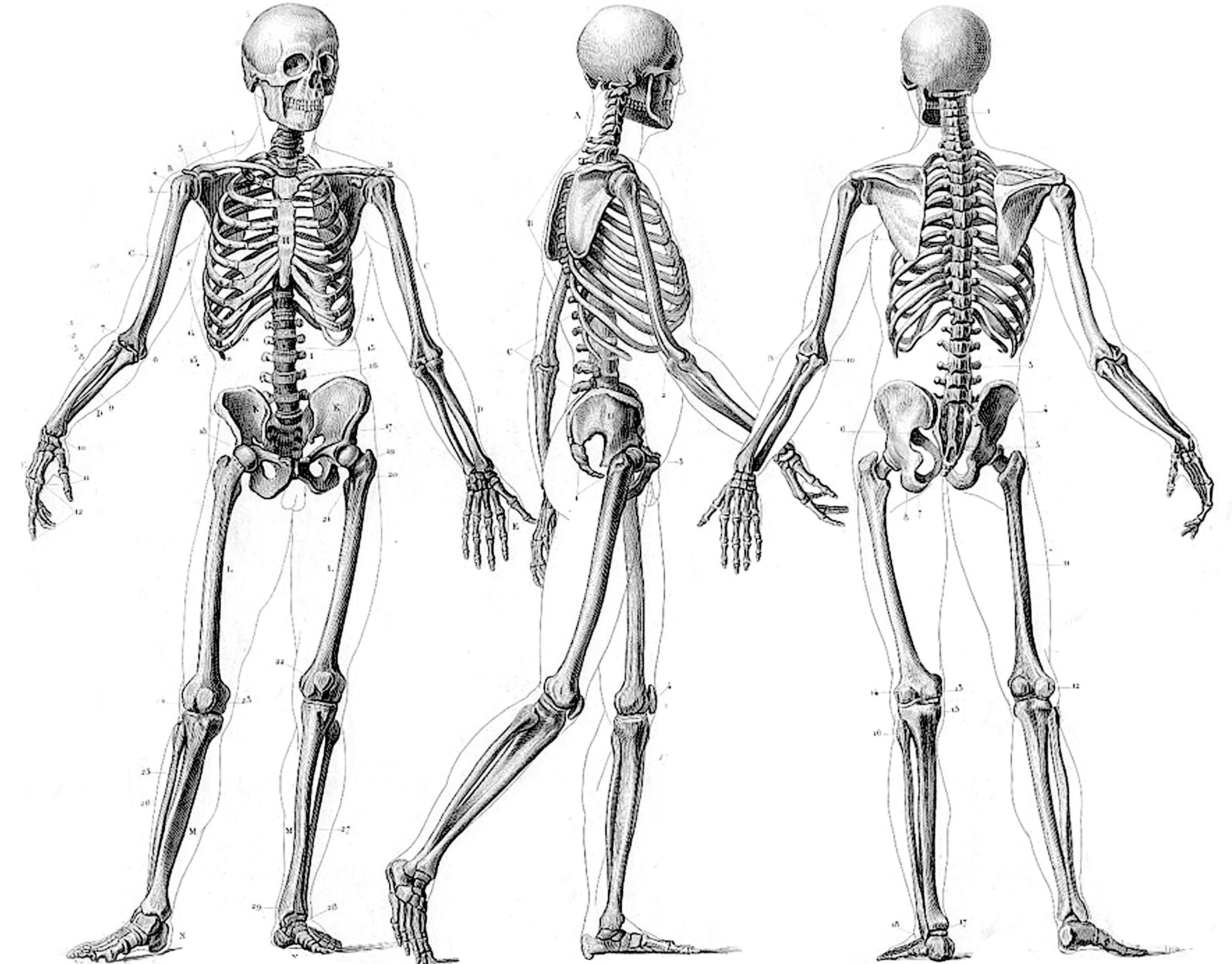 Skeleton Hd Wallpaper