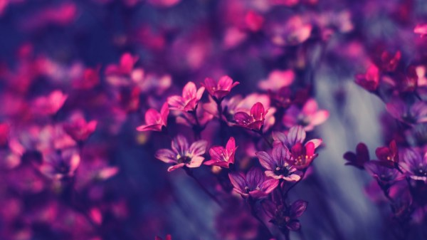 Flower HD Wallpaper | Background Image | 1920x1080 | ID ...