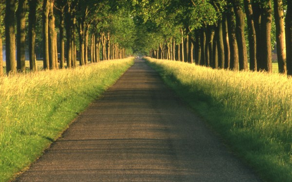 Path Full HD Wallpaper and Background Image   2560x1600 ...