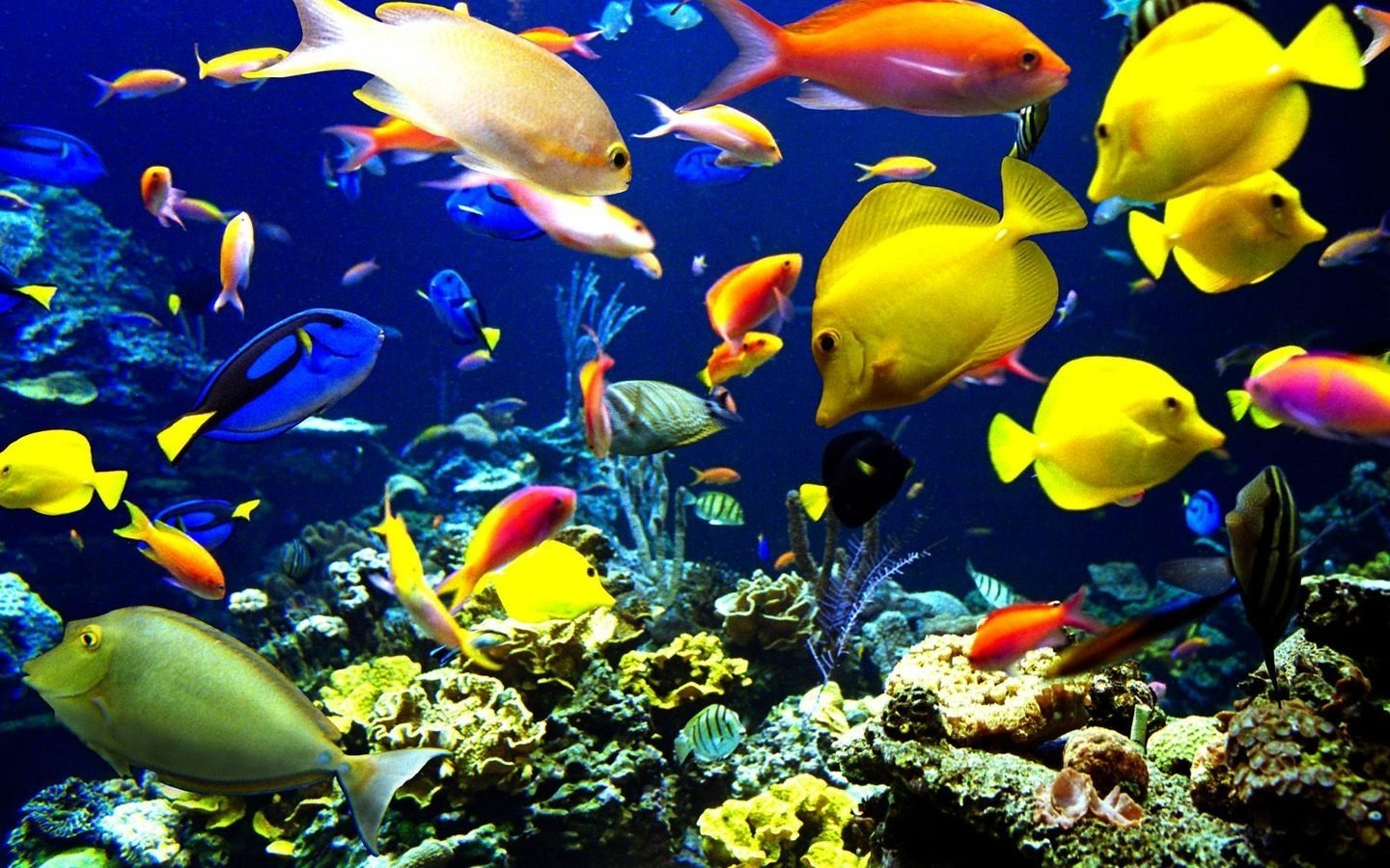 524 Fish Hd Wallpapers Background Images Wallpaper Abyss