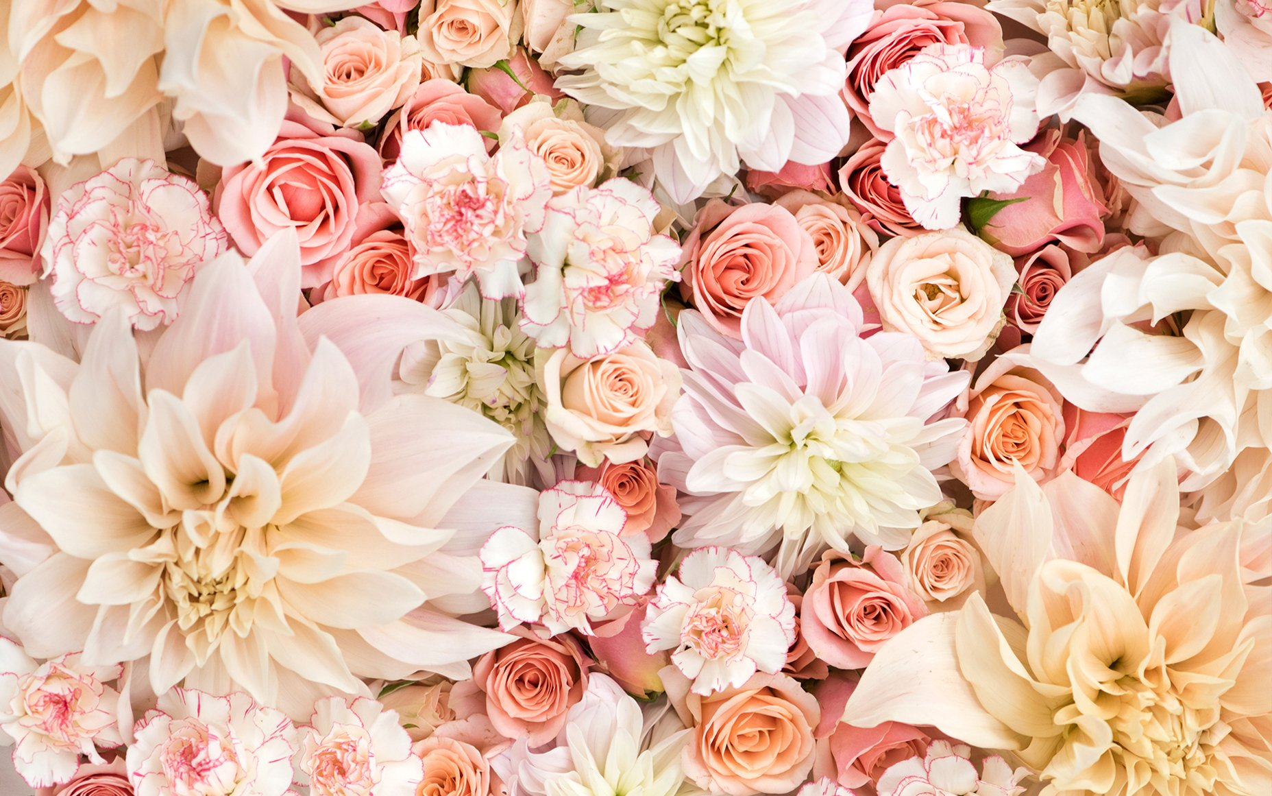 Flower pastel rose gold wallpaper iphone. Dahlias, Roses, and Carnations in Pastels Wallpaper and ...