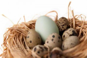 Easter egg nest, quail eggs, heirloom egg, nest