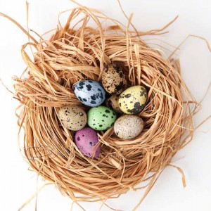 Easter egg nest, quail eggs, colored, nest, pink, yellow, blue, green
