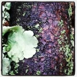 moss, lichen, raindrops