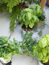 These herbs are looking for a new home