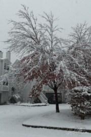 snow, storm, 2011, Oakridge