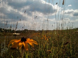 wild flowers, thunderstorm clouds, Kittatinny Valley State Park