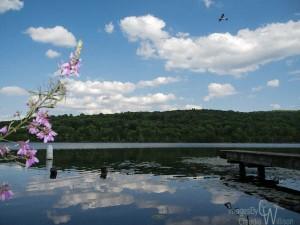 Kittatinny Valley State Park, lake, flying