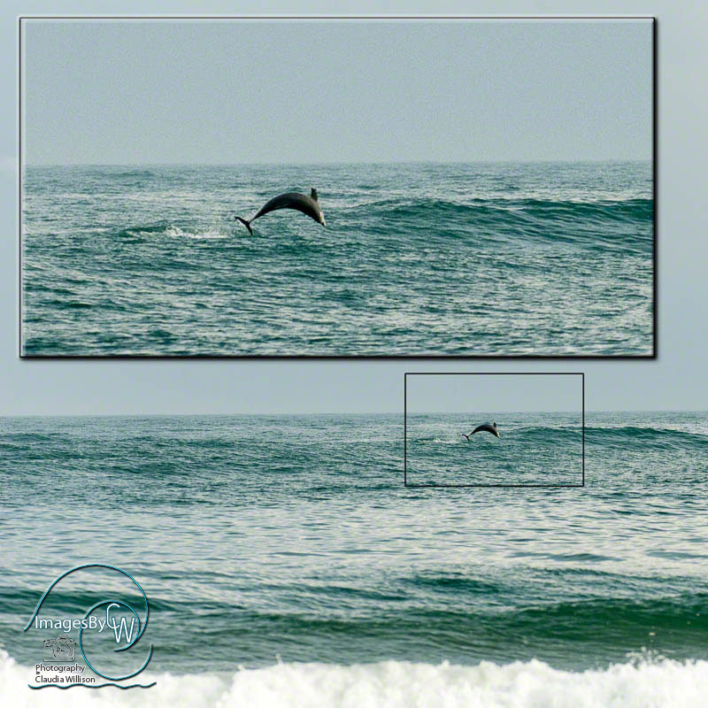 dolphin, jumping, ocean, waves