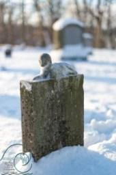 Graveyard Art: Lamb