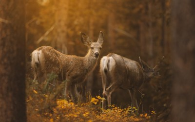 Photo animalière : adopter la bonne attitude