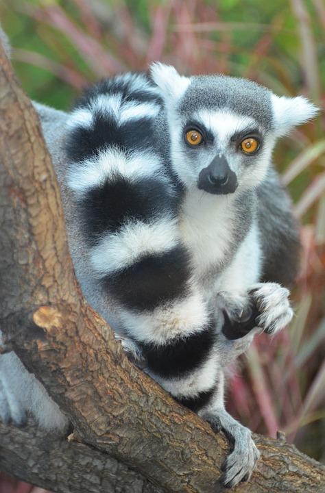 MADAGASCAR / МАДАГАСКАР