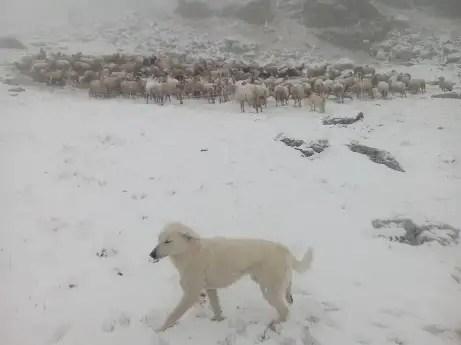 tanta neve nel Monregalese (CN), foto M.Baldo