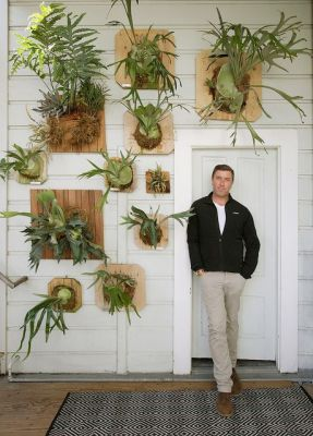Replanting Staghorn fern