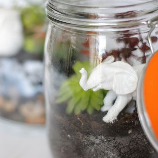 terrarium tutorial succulents elephant
