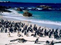 les pingoins