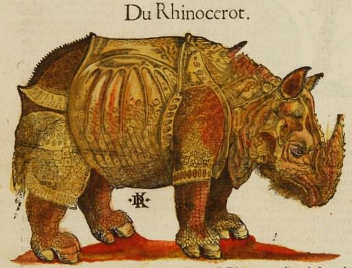 Kandel, rhinoceros d'après Dürer, 1580.