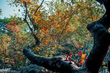 pr2006aacz0117 © LEVENT ŞEN