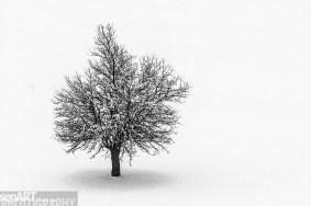2016yds_sen6762 © LEVENT ŞEN