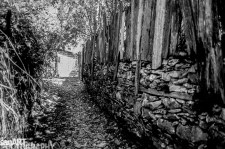 pr2016aaef_31© LEVENT ŞEN