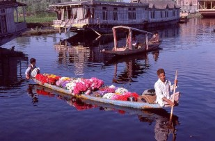 Daily Life in Vale of Kashmir, India, 1982 (29)