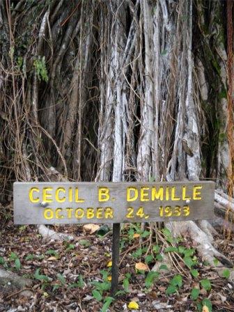 Banyan Drive Tree-Cecil_B_DeMille