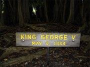 Banyan Drive Tree-King George V