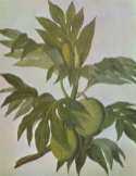 Breadfruit_drawing-18th_century