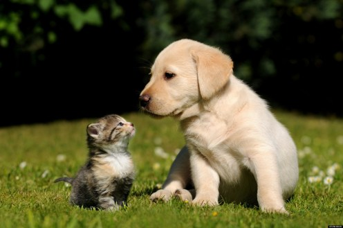 Cat and Dog; Shutterstock ID 119617003; PO: The Huffington Post; Job: The Huffington Post; Client: The Huffington Post; Other: The Huffington Post