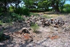 Clearing of invasive kiawe trees at Keolonahihi (Andy Bohlander)