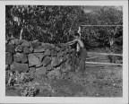 Coffee Mills Plantations-PP-17-1-013-00001