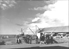 Cowboys at Kailua landing-PP-29-9-026