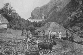 Crushing the Sugar Cane