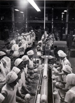 Dole_Pineapple_Cannery-(vic-&-becky)-1955