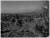 Farm land of Kona, Hawaii Island-PP-30-1-008-1930s
