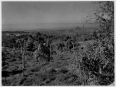 Farm land of Kona, Hawaii Island-PP-30-1-008-1930s